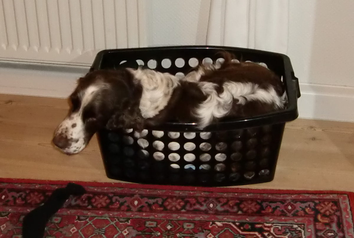 Misja i vasketøjskurv
